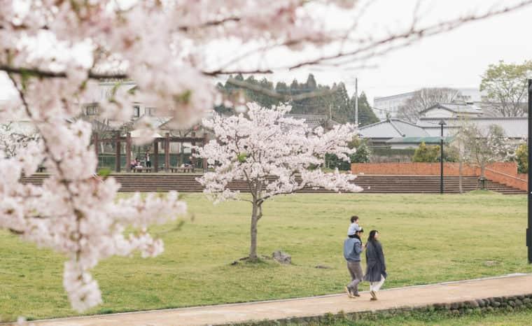 桜並木を散歩している家族